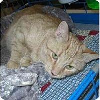Adopt A Pet :: Camille - Chesapeake, VA