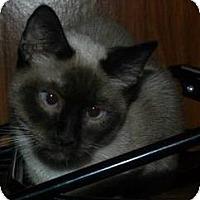 Adopt A Pet :: Temperance - Ennis, TX