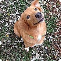 Adopt A Pet :: Brook - Portland, ME