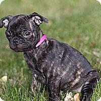 Adopt A Pet :: Ellie - Rigaud, QC