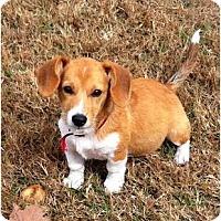 Adopt A Pet :: Buttercup - Palm Bay, FL