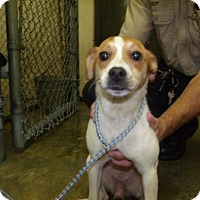 Adopt A Pet :: Charlotte - Rocky Mount, NC