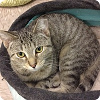 Adopt A Pet :: Jester - Byron Center, MI