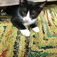 Adopt A Pet :: Chava aka