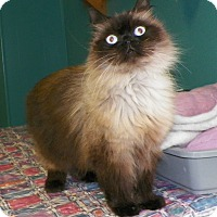 Adopt A Pet :: Holly - Dover, OH