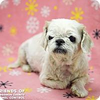 Adopt A Pet :: Teddie - Springfield, IL