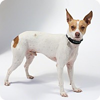 Adopt A Pet :: Ren - Santa Barbara, CA