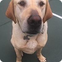 Adopt A Pet :: Simbah - Torrance, CA