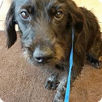 Adopt A Pet :: Kade - Murrells Inlet, SC