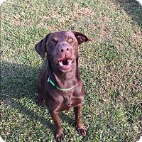 Adopt A Pet :: Drake - Daleville, AL