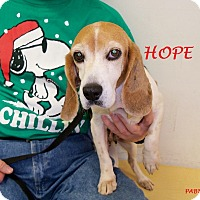 Adopt A Pet :: HOPE - Ventnor City, NJ