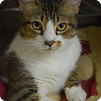 Adopt A Pet :: Maggie - Bradenton, FL