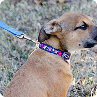 Adopt A Pet :: Nala - Arlington, TN