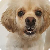 Adopt A Pet :: Huey - Fullerton, CA