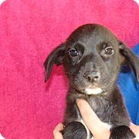 Adopt A Pet :: Mickey - Oviedo, FL