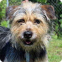 Adopt A Pet :: Hillary - Newport, NC