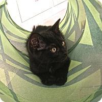 Adopt A Pet :: Randall - Covington, KY