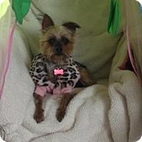 Adopt A Pet :: Fergie - Los Angeles, CA
