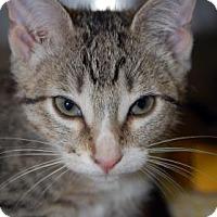 Adopt A Pet :: Billy Sue - Bradenton, FL