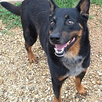 Adopt A Pet :: Rob - Post, TX