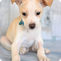Adopt A Pet :: Nathan - Waldorf, MD