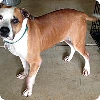 Adopt A Pet :: Richie - Crystal Lake, IL