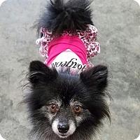 Adopt A Pet :: Elsie - Sacramento, CA
