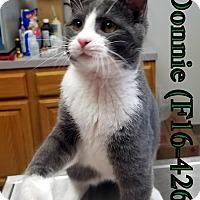 Adopt A Pet :: Donnie - Tiffin, OH