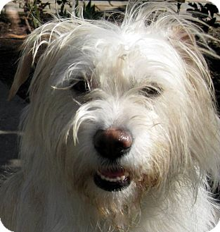 Terrier (Unknown Type, Medium) Mix Dog for adoption in Oakley, California - Shelby