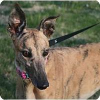 Adopt A Pet :: JA's Timeless