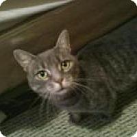 Adopt A Pet :: Jerry - Springfield, PA