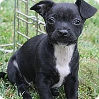 Adopt A Pet :: Buster - La Habra Heights, CA