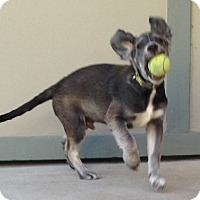Adopt A Pet :: Sharkey - sweet, adorable pup! - Los Angeles, CA