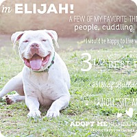 Adopt A Pet :: ELIJAH - Kingston, WA