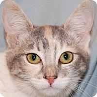 Adopt A Pet :: Heidi - Buena Park, CA