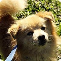 Adopt A Pet :: tink Adoption pending - East Hartford, CT