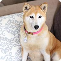 Adopt A Pet :: Riza - Manassas, VA