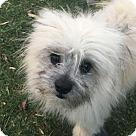 Adopt A Pet :: Adopted! Chewey
