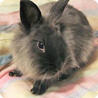 Adopt A Pet :: Cashmere - Hillside, NJ