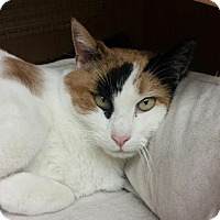 Adopt A Pet :: Tama - East Meadow, NY