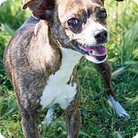 Adopt A Pet :: Keba - Patterson, CA