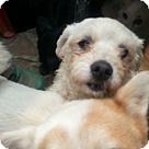 Adopt A Pet :: Sunshine