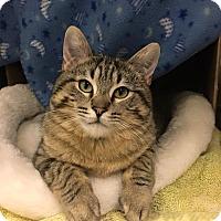 Adopt A Pet :: Snow Puff - Chicago, IL