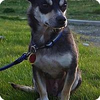 Adopt A Pet :: Reggie - Custer, WA