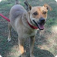 Adopt A Pet :: Ziva - Batesville, AR