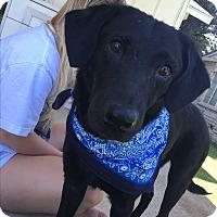 Adopt A Pet :: Jake aka Vidor - White Settlement, TX