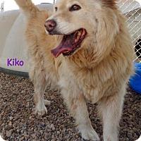 Adopt A Pet :: Kiko - Oskaloosa, IA