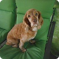 Adopt A Pet :: Lucky Boy -Special Needs - Kannapolis, NC