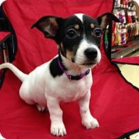 Adopt A Pet :: Minnie - Royal Palm Beach, FL