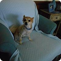 Adopt A Pet :: Miranda - Kannapolis, NC